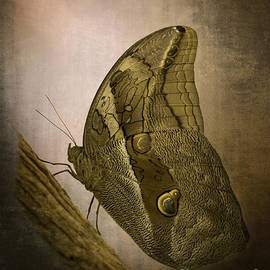 Inge Riis McDonald - Graffic Owl Butterfly