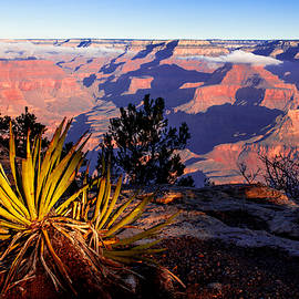 Grand Canyon 31 by Donna Corless
