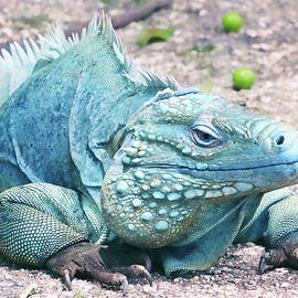 Iryna Goodall - Grand Cayman Blue Iguana