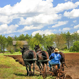 Grandpa And His Team Of Horses At Old World Wisconsin by Christopher Arndt