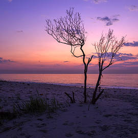 Amy Jackson - Grandview Beach Sunrise