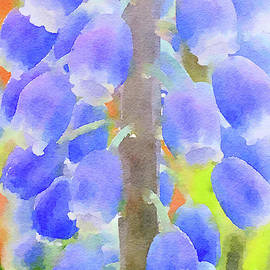 Grape Hyacinths 1 by Chris Scroggins