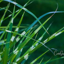 Grass Blades by Connie Allen