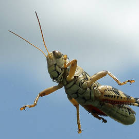 Grasshopper I by James Granberry