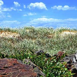 Grassy Sand Dune by Kaye Menner