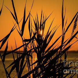 Tom Rostron - Grassy Sunset