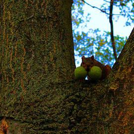 Michael Rucker - Grateful Tree Squirrel