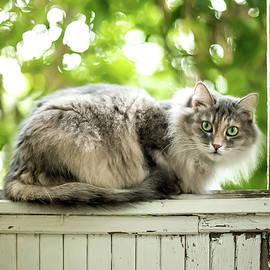 Gray Cat Sitting on a Balcony