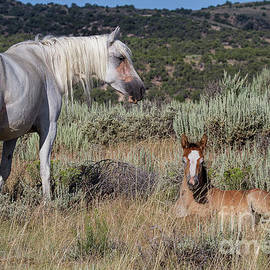 Jim Garrison - Gray Lady and Foal