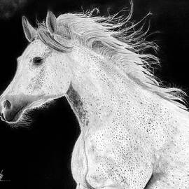 Gray speckled Arabian Horse