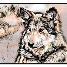 Scott Wallace - Gray Wolf Illustration