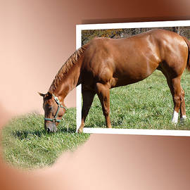 Eleanor  Bortnick - Grazing Horse