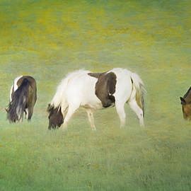 Grazing Time by Hal Halli
