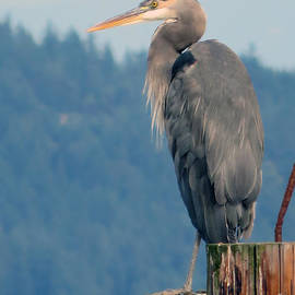 Great Blue Heron by Cindy Murphy - NightVisions