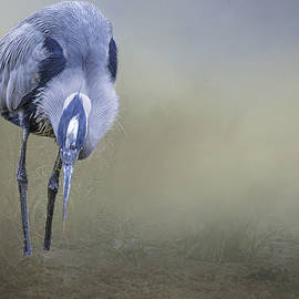 Great Blue Heron by Peggy Blackwell