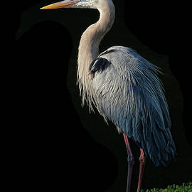 HH Photography of Florida - Great Blue Heron Pose
