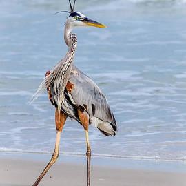 Great Blue Heron Posing With Style by Debra Martz