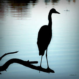 Brian Wallace - Great Blue Heron Silhouette