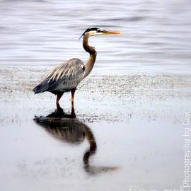 Great Blue Heron reflection Florida Wetlands Merritt Island  by Charlene Cox