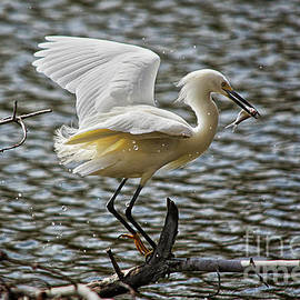 Great Egret Fishing by Spade Photo