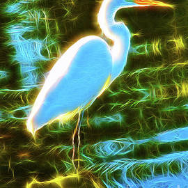 Jerome Stumphauzer - Great White Egret