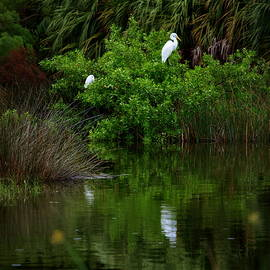 Great Egret by James Granberry