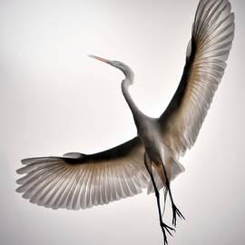 Great Egret Majesty by Brian Tada