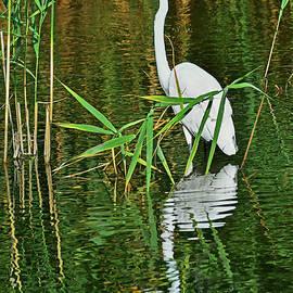 Regina Geoghan - Great Egret NJ Meadowlands
