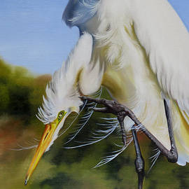 Phyllis Beiser - Great Egret In Fall