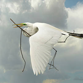 Great Egret by Sherry Adkins