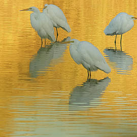 Great Egrets 5005-112813-4cr by Tam Ryan