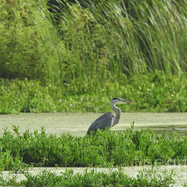 Ruth Housley - Great Heron Standing On The Edge Of Lake