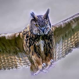 F Leblanc - Great Horned Owl in Flight