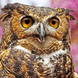 Great Horned Owl by Kevin Anderson