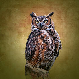 Phyllis Taylor - Great Horned Owl No 2