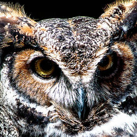Norman Johnson - Great Horned Owl
