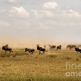 Great Migration by RicardMN Photography