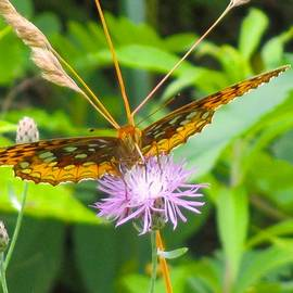 Great Spangled Fritillary by Kendall Kessler