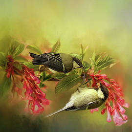 Robert Murray - Great Tits Squabbling on Floral Branch