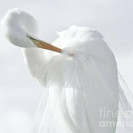 Great White Egret 272 by Paulette Thomas