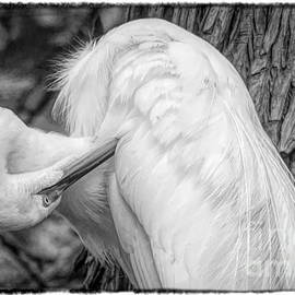 Great White Egret Negative by Paulette Thomas