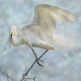 Patti Deters - Great White Egret - Sky Dancer #1