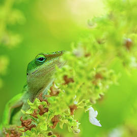Green Anole Lizard Ascending A Plant by Brad Boland