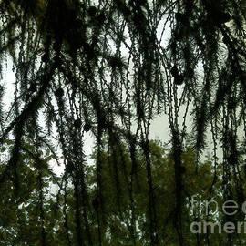 Green Autumn by Kim Tran