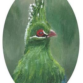 Green Bird - Guinea Turaco by Jennifer Gonzalez