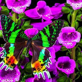 Garry Gay - Green Butterfly On Foxglove