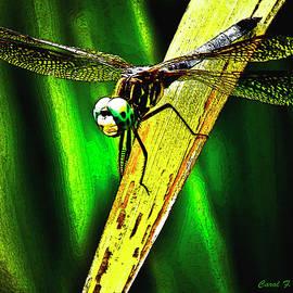 Carol F Austin - Green Darner Dragonfly Frontal Portrait