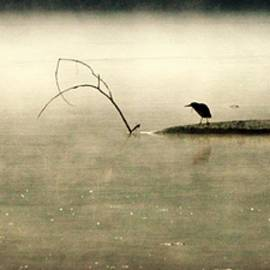 Green backed Heron in Dawn Mist by Kathy Barney