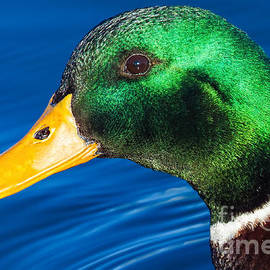 Green in Blue by Gary Holmes