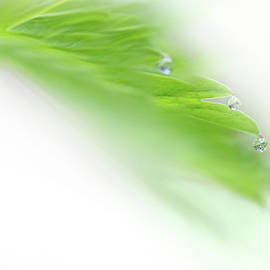 Jennie Marie Schell - Green Leaf with Water Drops